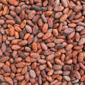 Cargill to end cocoa deforestation