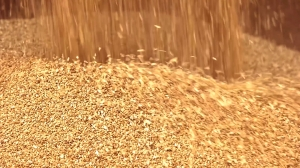 New Euroports grain unloading station