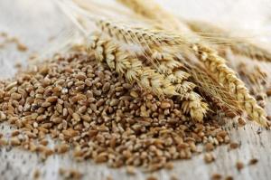 South Australia's grain harvest falls