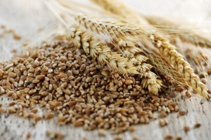 Support for U.S. Grains Act
