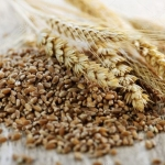 South Australia's grain harvest falls